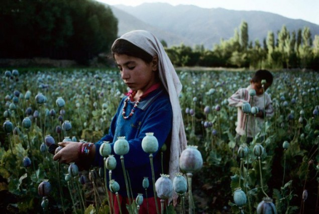 Children Dying from Opium Addiction